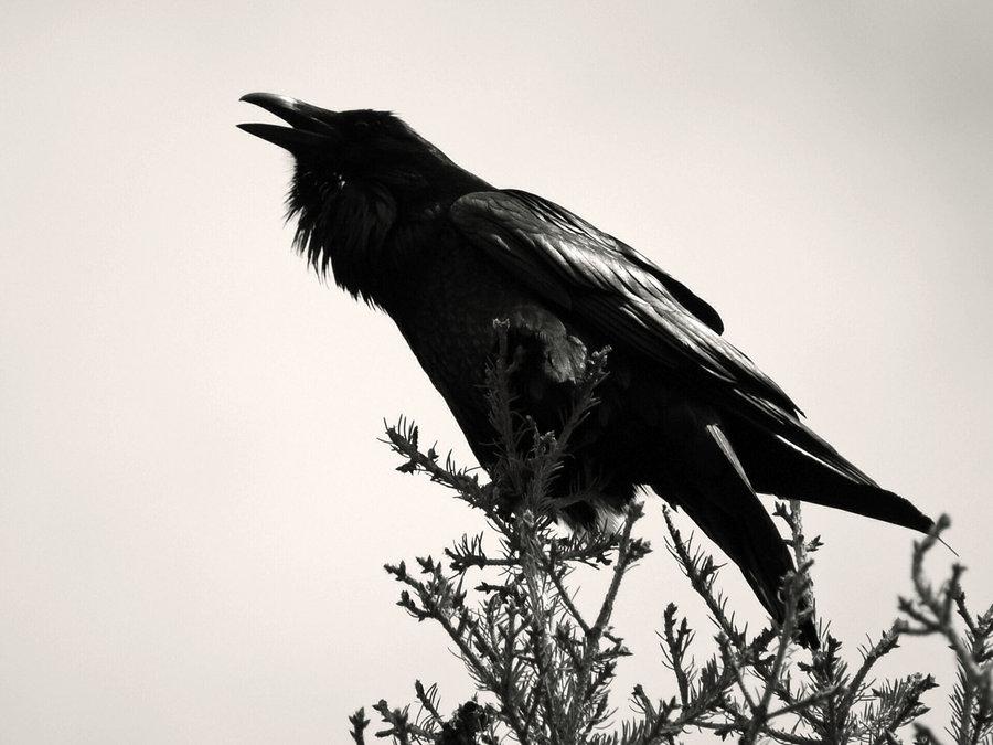 пришло картинки черного ворона черно белые макияж